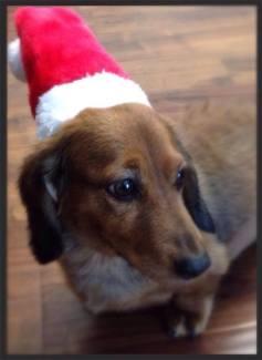Buddy - Christmas Hat (002)