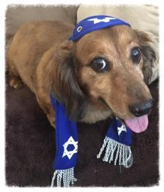 Buddy - Hanukkah Outfit (002)
